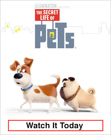 The Secret Life of Pets - Order Today