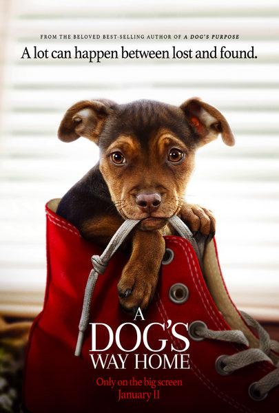 A Dog's Way Home - Trailer